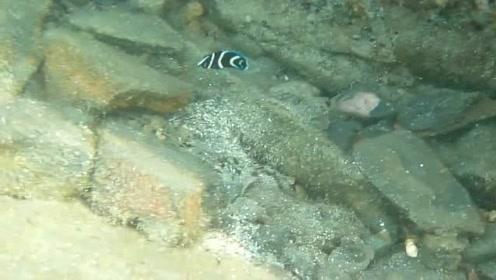 涨潮后石头坑里有几条迷路的小鱼
