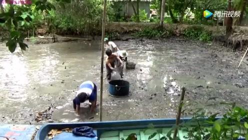 越南:小小鱼塘抽干水,捉到几大桶野生鱼,环境真好!