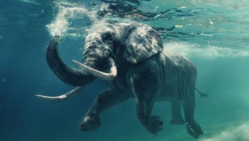 非凡的游泳员
