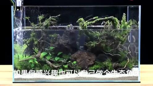 鱼缸使用方法步骤图片