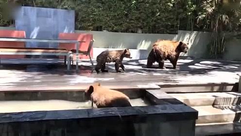 棕熊妈妈携子溜进民宅后院 两幼崽喷泉嬉闹解暑_01