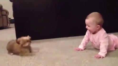 脑洞大开!小狗与小男孩互怼,出口成章