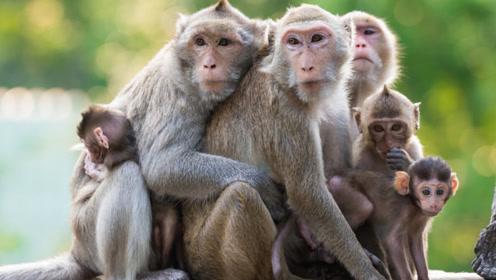 男子在亚马逊丛林中失踪,被猴子救出