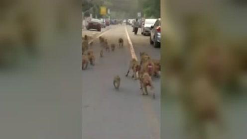 这么多猴子占领印度政府办公区
