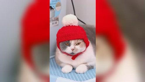 我给猫咪买了帽子,戴上后它们全生气了