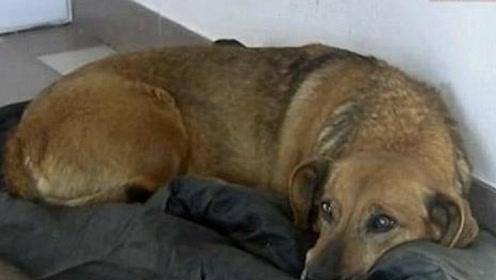 网友收养的狗狗, 每天都要偷跑到医院, 得知背后原因让人感动!