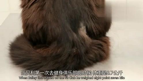 美女养的猫体重蹭蹭的上涨,涨到17.4斤,相当于一岁孩子的体重
