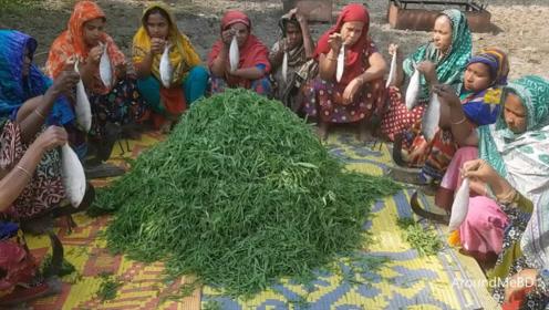 印度村民改善生活,摘来上百斤蔬菜,13条鱼,看看这吃法我服了!