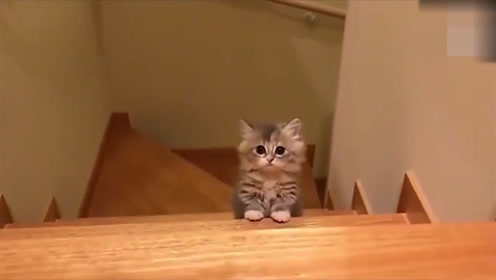 两只猫打架,如何分辨公的和母的,看来猫也怕老婆
