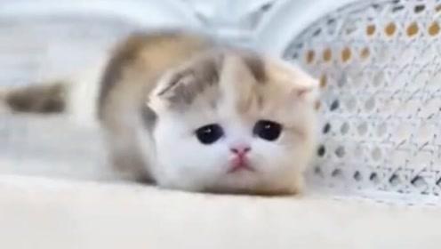 一只萌到出水的小喵喵,我的吸猫瘾又上来了