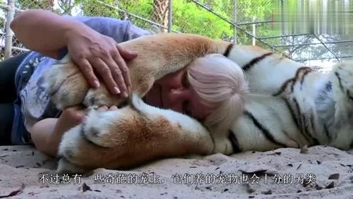 老虎每天叫主人起床,老虎:你起床的速度,决定了我早餐该吃啥
