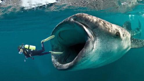"""人在大海中被""""鲸鱼""""一口吞下,还能存活吗?看完感觉太神奇了!"""