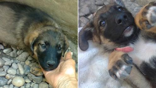 主人去世后,狗狗挖洞守墓2年,拉出去狗狗后,却发现意外惊喜!