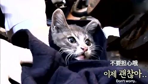 泪奔!小猫守着死去的妈妈,叼来肉给妈妈,自己却啃树根?