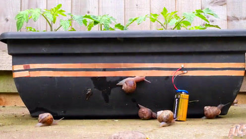 这到底是谁发明的花盆 蜗牛们简直要崩溃了