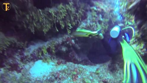 潜水胜地美娜多到底有多美?看完视频忍不住要试一试!