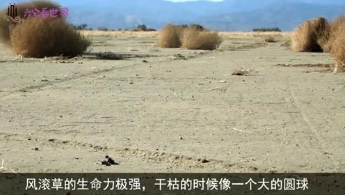 """美洲一植物杀伤力极强,能自己""""行走"""",中国表示不能吃的帮不了"""