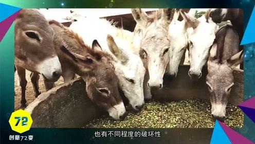 8头驴因破坏植物,被关监狱4天劳改