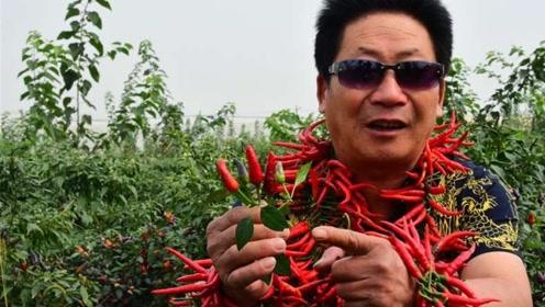 中国辣王果然名不虚传!竟把辣椒当成主食,顿顿都吃还就酒!