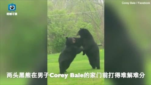 家门前惊现两头黑熊在打架,男子躲进屋内不敢出来