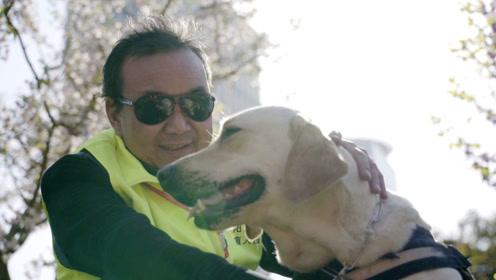 盲人过马路求助路人却被嘲笑,用上导盲犬后能跑马拉松爬长城