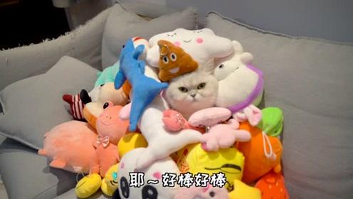 50个娃娃测试猫咪呆萌度,一动不动是假猫吧