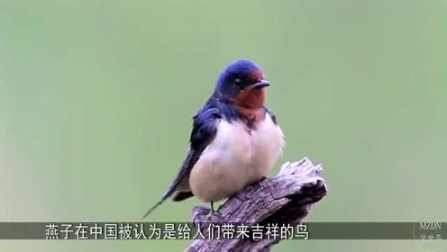 奇闻:为什么中国人什么肉都吃,就是不吃这种肉呢?