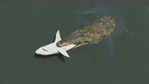 男子给鳄鱼投食,鲨鱼突然凑上来,下一秒意外发生!