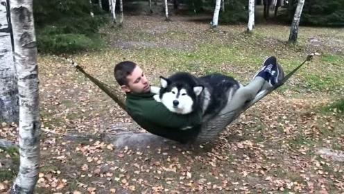 200斤的狗狗躺在主人怀里荡秋千,狗狗:人家还是个宝宝呢