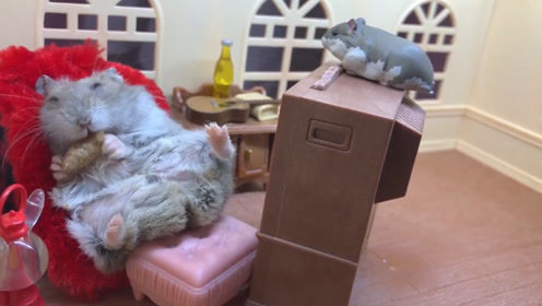 小仓鼠一边吃零食一边看电视,非常的惬意,真是人生赢家!