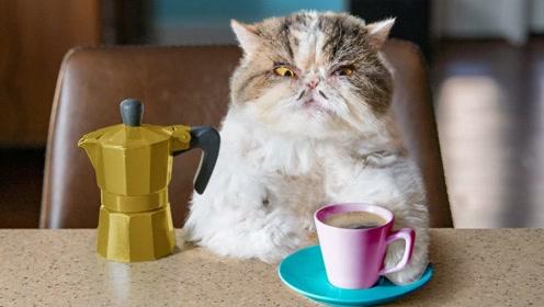 喵星人喝咖啡后开挂,竟然当上了总统?
