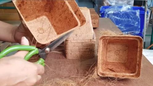 这么硬的椰子壳,泰国竟然将它做成了罐子,这生产方式第一次见!
