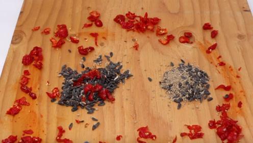 老外将死神辣椒放在地上,老鼠吃掉后,下一秒达到鼠生巅峰!