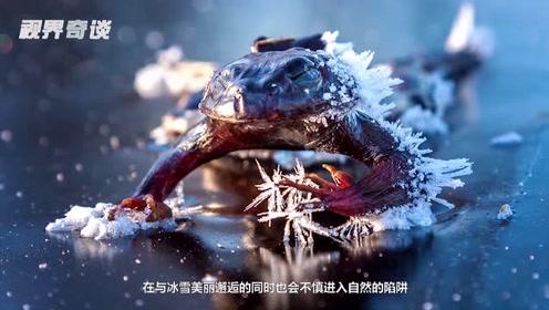 """6个被""""冰封""""的可怜动物!解冻之后竟然还能复活!"""