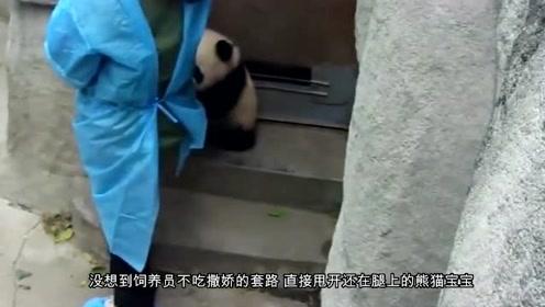 熊猫宝宝抱着饲养员卖萌,看到视频后,网友:难怪你是国宝!