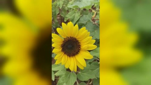 好美的花儿啊