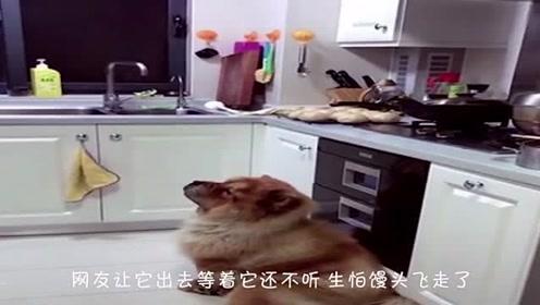 正宗吃货!松狮一直守在厨房里,只为吃到刚出锅的馒头