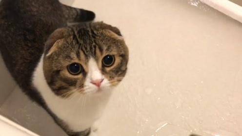 趣味萌宠:可爱小动物宝宝趣事