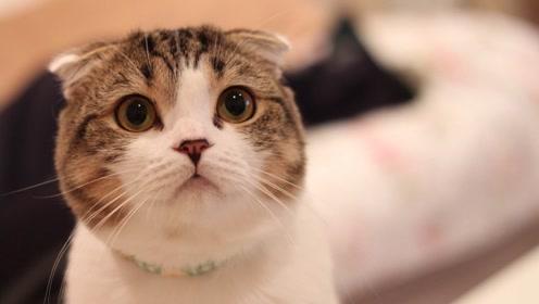 活动 圆脸小猫3 分析色块,呈现体积