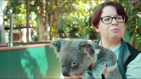可伦宾野生动物园 与考拉袋鼠的亲密接触