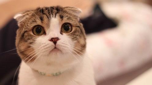 活动圆脸小猫7——整体调整