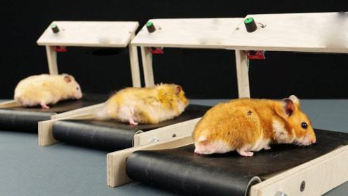 DIY:老外给自己的宠物仓鼠做了台跑步机,别说,还真实用