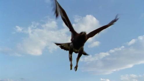 金鹰的视力比人类高五倍,它在一公里外发现了一只鼠兔