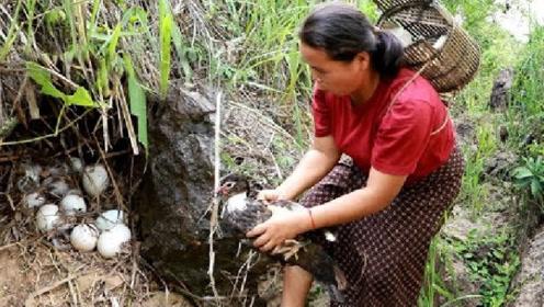 农村大姐上山砍柴发现野鸭窝,一锅端了,这下可以美美的吃一顿了