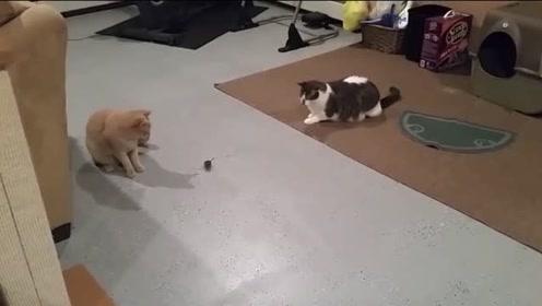 真实版汤姆和杰瑞!老鼠怕猫那是谣传