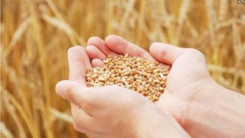 未来中国,如果粮食价格越来越低,庄稼人究竟该何去何从?