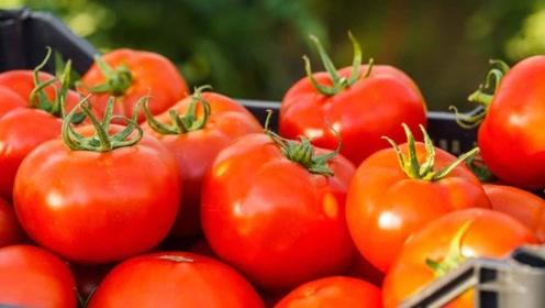 喜欢吃西红柿的来看看!看完记得告诉家里人,很重要的哦
