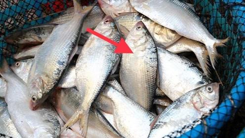 爱吃鱼的都看看,好多人还不清楚,叮嘱家人们,等吃亏就来不及了