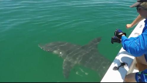 海钓超级大鲨鱼,人都快累虚脱了,最终征服了这条大鲨鱼