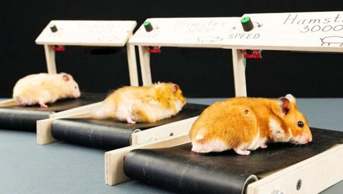 """国外小哥给老鼠做了个""""跑步机"""",真是太有创意了"""